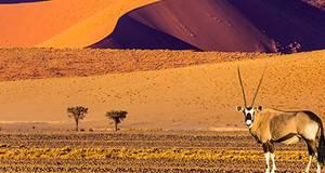 Pacote Namíbia