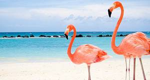 Pacote Aruba + Curaçao